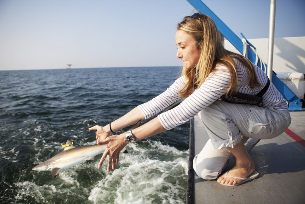shark research in the gulf of mexico